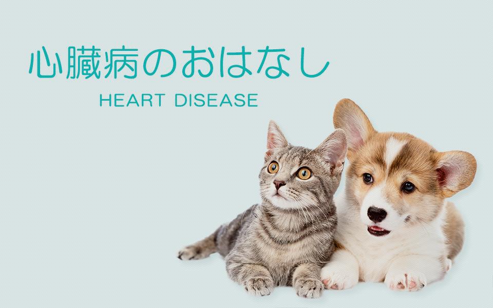 心臓病のおはなし